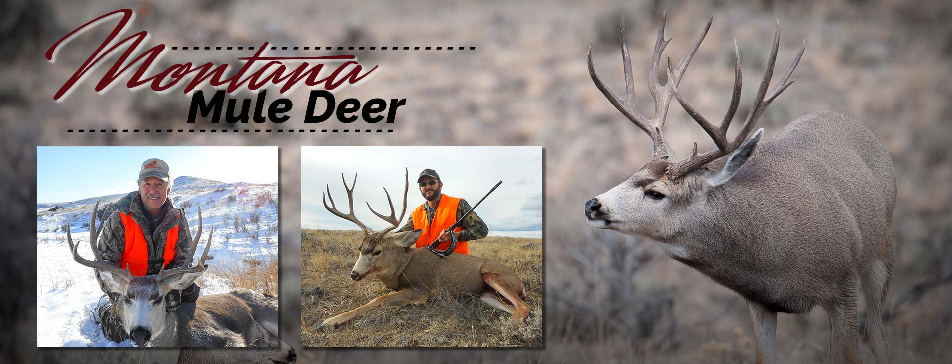 Montana Mule Deer Hunting Guide & Outfitter