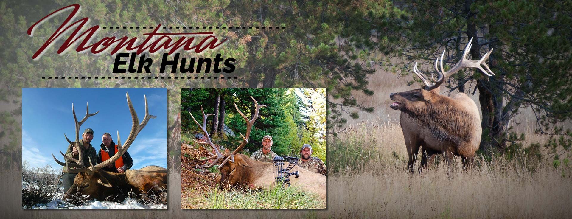 Elk Hunting Guide & Outfitter