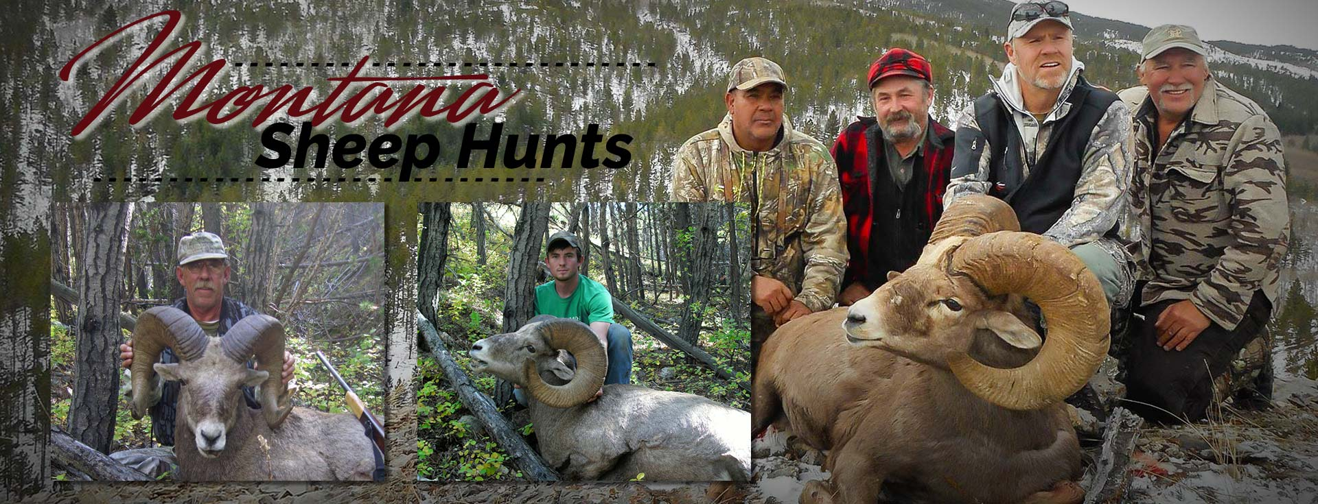 Montana Bighorn Sheep Hunting Outfitter