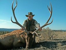 This elk is 44 inches wide