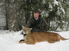 Montana mountain lion hunts, a fish creek lion