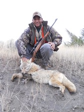 Montana coyote hunting pictures