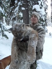 Mountain lion hunting in Montana and Idaho